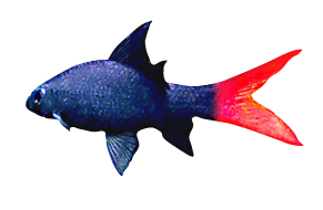 Leadership, Management & Communication Skills - Red Training & Consultancy